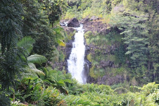 Akaka Falls State Park: The main attraction.