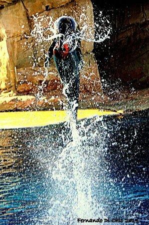 Riccione, Italien: delfino durante un salto