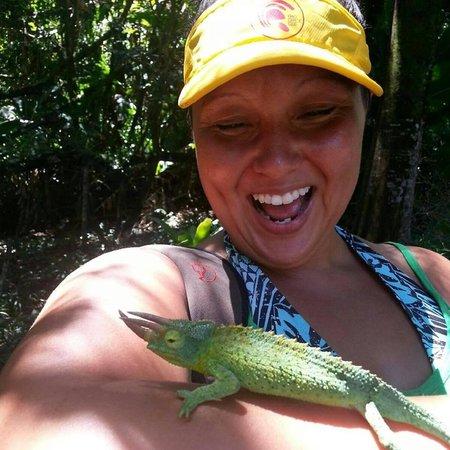 Hike Maui: Jackson Chameleon!