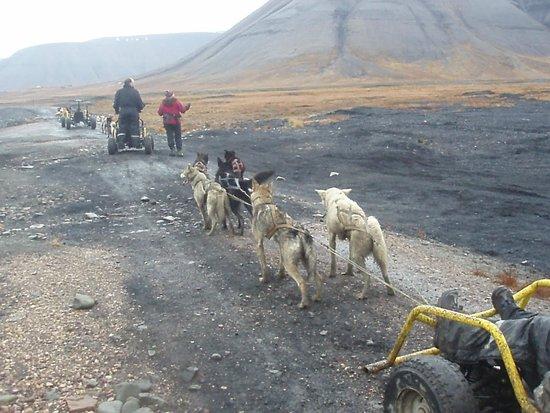 Svalbard Husky : Here we goes - in Adventsdalen