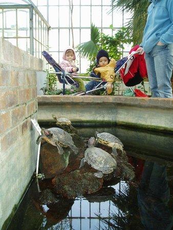 jardin botanique de metz les tortues - Jardin Botanique Metz