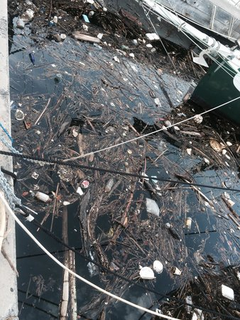 Ala Wai Yacht Harbor: What tourists see and smell as they promenade...
