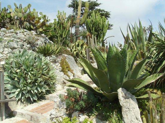 Giardini esotici picture of le jardin exotique d 39 eze for Jardin exotique