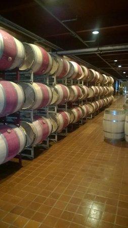 San Francisco Shuttle Tours: Mondavi Winery