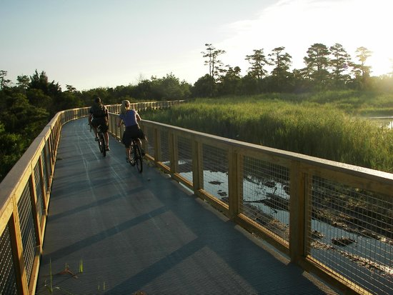 Gordons Pond : Great cycling (but note how narrow the path is)