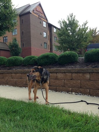 Residence Inn Lexington Keeneland/Airport: A dog-friendly property!