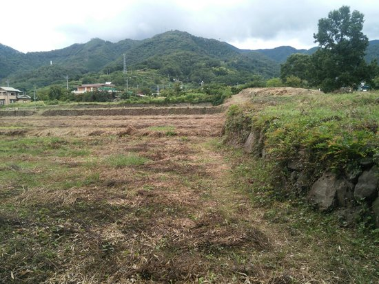 Mr. Takeda Residence Remains : 武田氏館跡