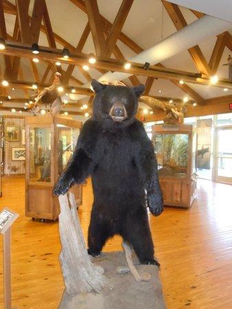 5 Rivers - Alabama's Delta Resource Center: Stuffed bear