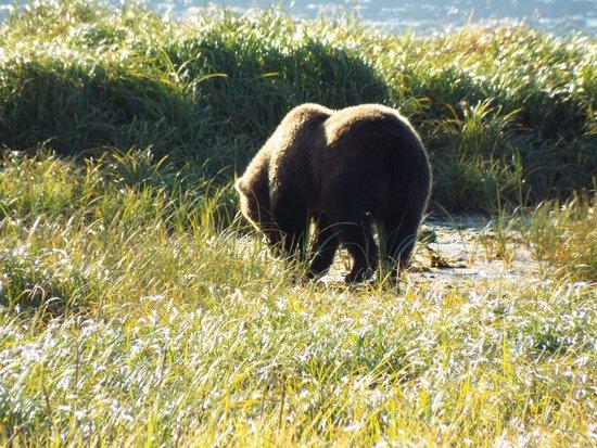 Kodiak Island Van Tours: Our 4 yr old bear