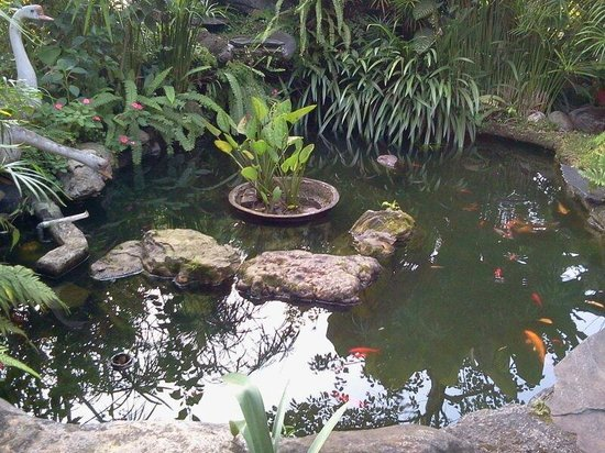 Fish ponds in java