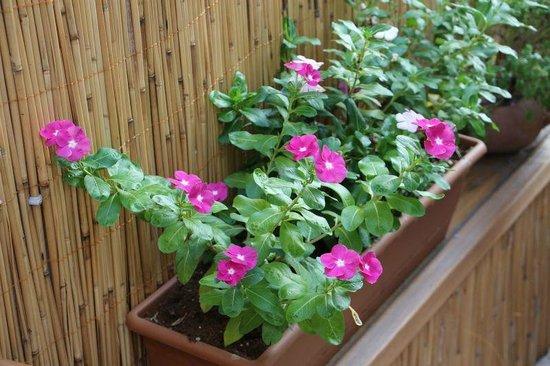 Siesta Hotel: garden