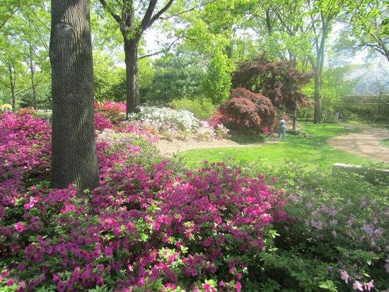Missouri Botanical Garden: Park-like scene