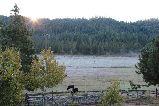 4D Longhorn Guest Ranch : Morning sun.