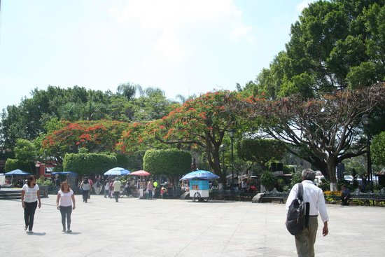 Plaza de Armas de Cuernavaca: Royal Poinciana trees onthe southern side flower bright red in May