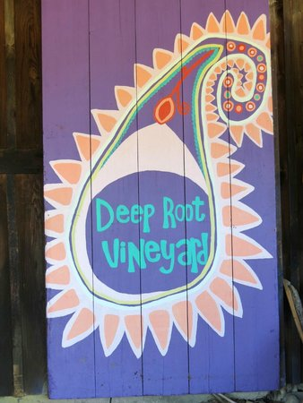 Deep Root Vineyard