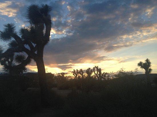 """BEST WESTERN Joshua Tree Hotel & Suites : """"Desert Delight"""""""