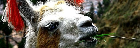 Inkatraces Day Tours: Simply a Llama...
