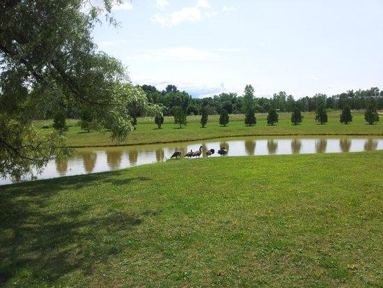 Days Inn Shelburne/burlington: Pond Ducks