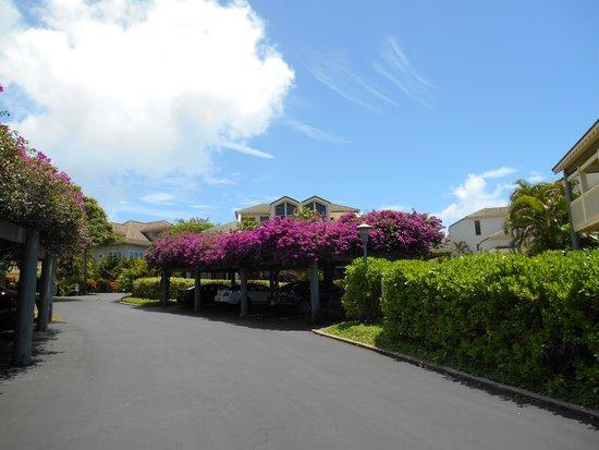 Poipu Kai Resort - Suite Paradise: 駐車スペースはブーゲンビリア棚の下です。