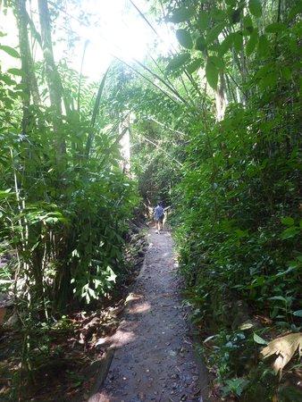 Gibbon Rehabilitation Project: Heading to Bang Pae Waterfall
