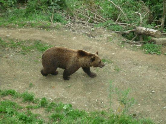 Bärenpark: the bear
