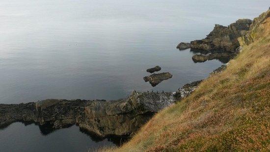 Seafield House : Vue de la falaise en bout de la propriété !