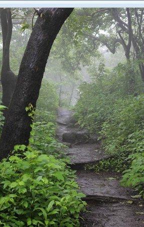 Karnala Fort: Trek path