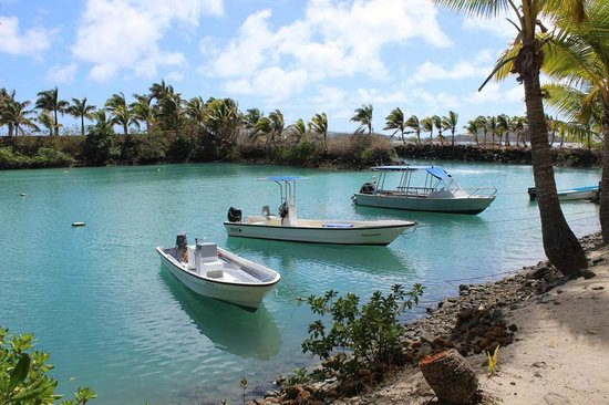 Wananavu Beach Resort: The Quaint marina