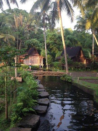 Bambu Indah : View from side door of Afrika House