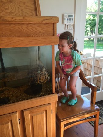 Bethany Beach Nature Center: Feeding turtles