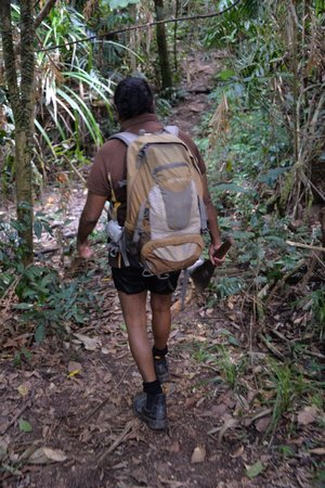 Ingan Tours- Day Tours: Spirit of the Rainforest Walk