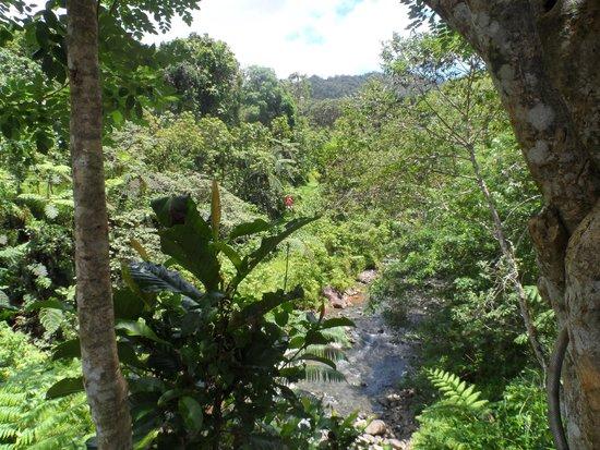 Zip Fiji: The view