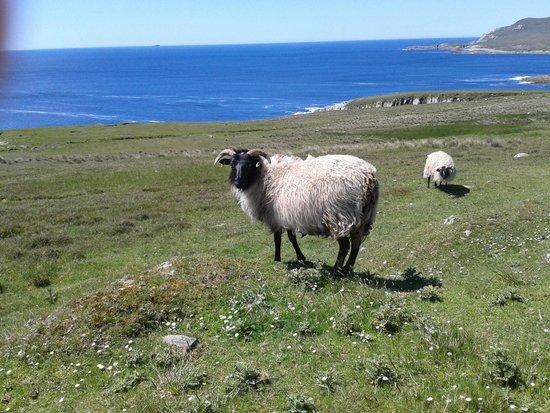 Atlantic Drive on Achill Island: les résidents permanents d'Achill Island