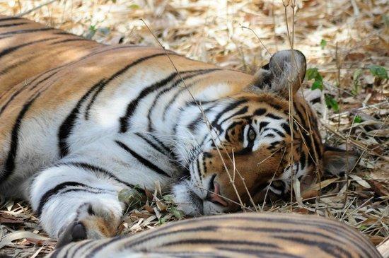 Bannerghatta National Park : Sleepy