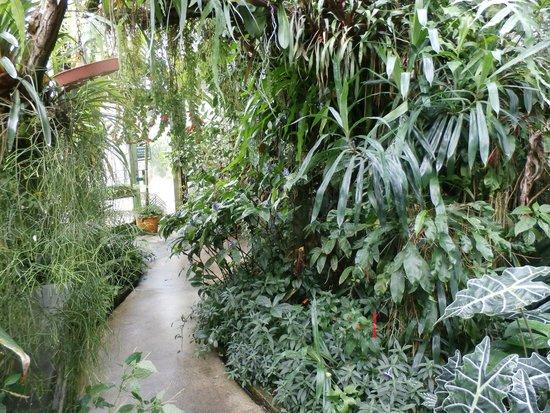 Botanischer Garten der Universität: Greenhouse