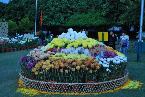 Chandigarh, India: different varieties Chrysanthemum