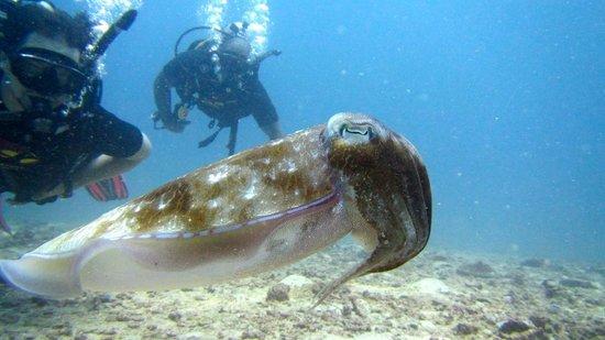 Super Divers: Cuddle fish