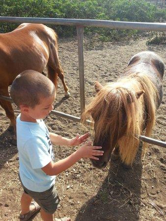 Agriturismo Iacchelli: Pony