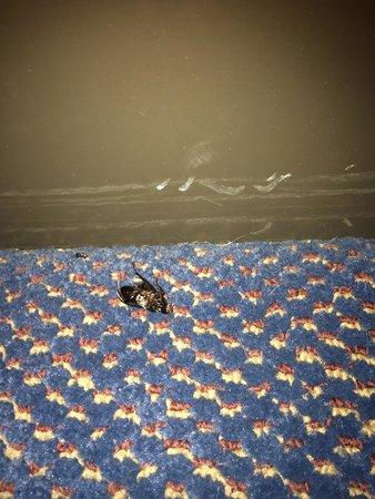 New Sunflower Inn & Suites: Carpet had a dead bug