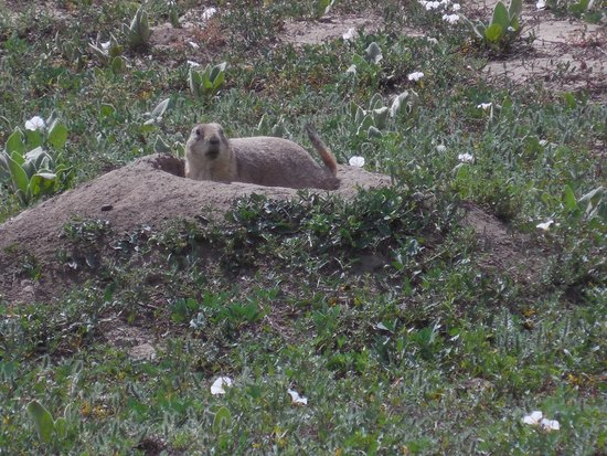 Rocky Mountain Arsenal National Wildlife Refuge: prairie dogs surrounding refuge