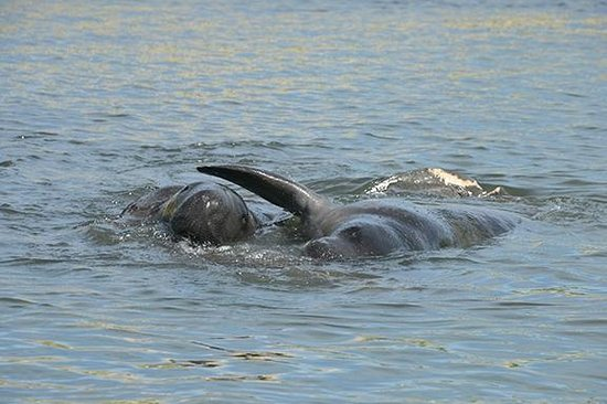 Ponce Inlet Watersports: Sweet manatee love.