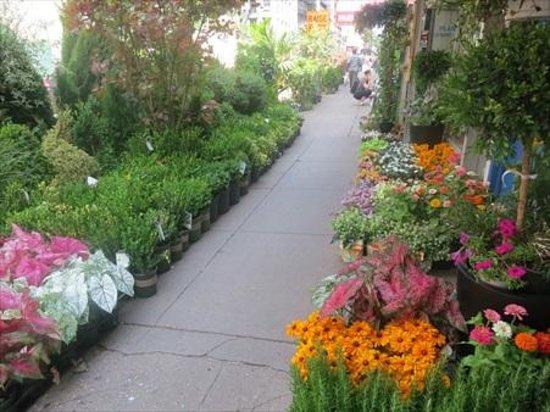 Hilton Garden Inn New York/Manhattan-Chelsea: Plenty of flowers in the Chelsea District