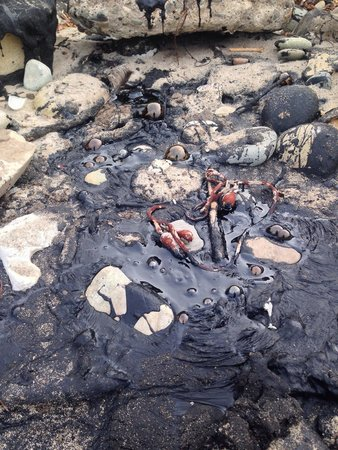 Tar Pits Park: Tar oozing out from the rock