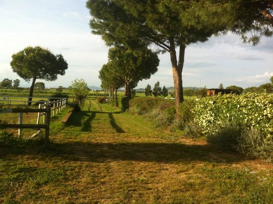 Agriturismo La Serrata: Guardando verso i paddock
