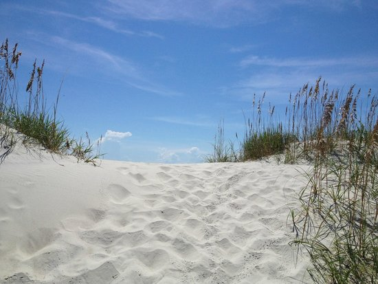 Masonboro Island Reserve : View from the dunes