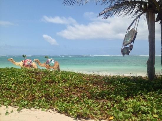 The Maji Beach Boutique Hotel: nelson n sheila