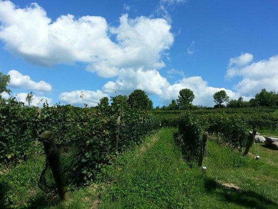 Heart & Hands Wine Company: Heart and Hands vineyards