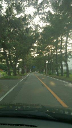 Row of Pine Trees in Kyutokaido: 旧東海道のサイドを松並木が延々と続く
