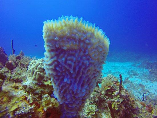 real ocean sponges - 550×413