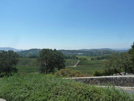 Palmaz Vineyards: Palmaz Vineyard